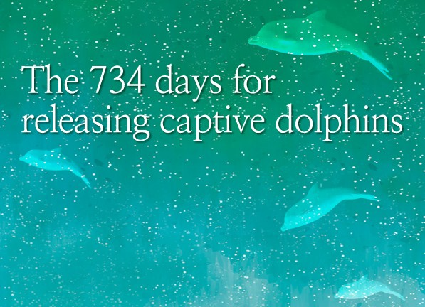 The 734 days for releasing captive dolphins